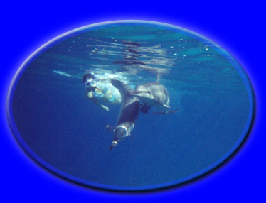 Click the pic to go deeper...into Ecstatic Dolphin Journeys Homepage