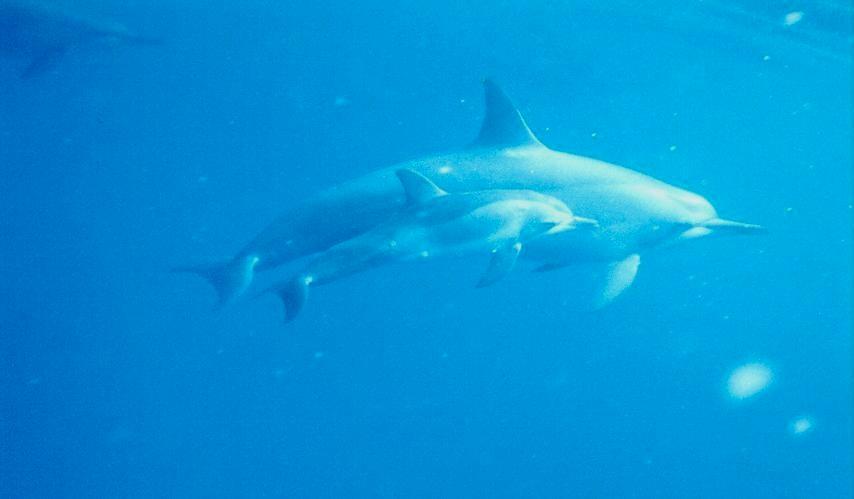 Ocean kayaking dolphins