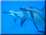 View photos in the largest collection of dolphin photos on the Internet